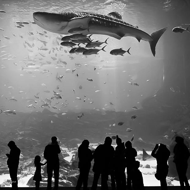 viewing big fish